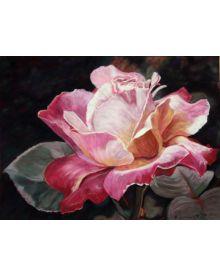 Memories of My Peace Rose