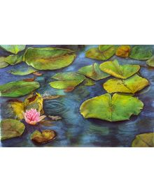 Watercolour Workshop - Water Lily